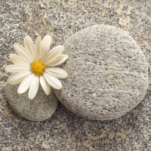 Stone and pebble background with a daisy